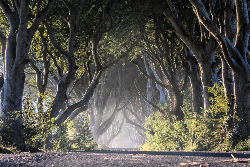 Ireland Group Tours, Dark Hedges